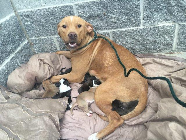 Неужели у собак больше человечности, чем у людей? Ведь даже оказавшись на улице, она не предала своих детенышей, и не потеряла веру в людей!